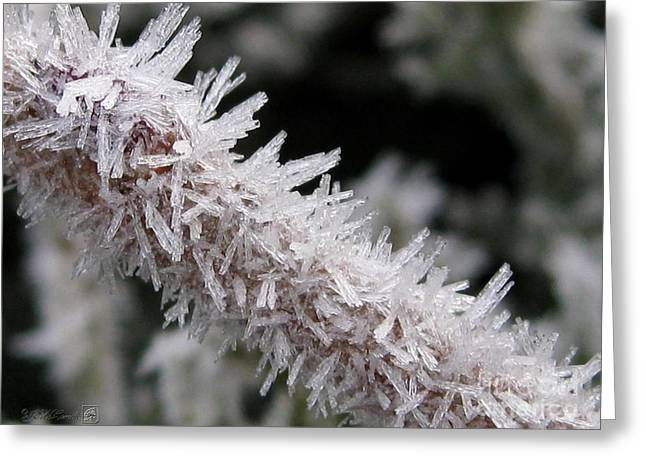 Mccombie Greeting Cards - Ice Crystal Formation along a Twig Greeting Card by J McCombie
