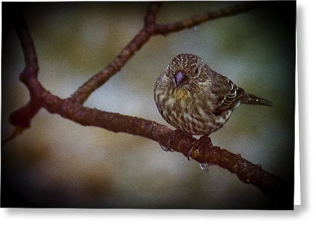 Wild Orchards Greeting Cards - Ice Droplet Bird Greeting Card by LeeAnn McLaneGoetz McLaneGoetzStudioLLCcom