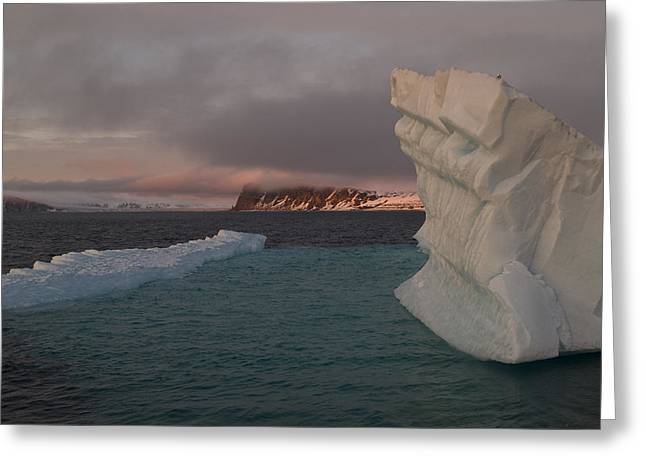 Ice Formations Float In Blue Water Greeting Card by Norbert Rosing