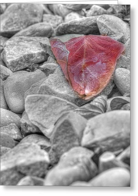 Selective Colouring Photographs Greeting Cards - Ice on a Leaf Greeting Card by Lisa Knechtel