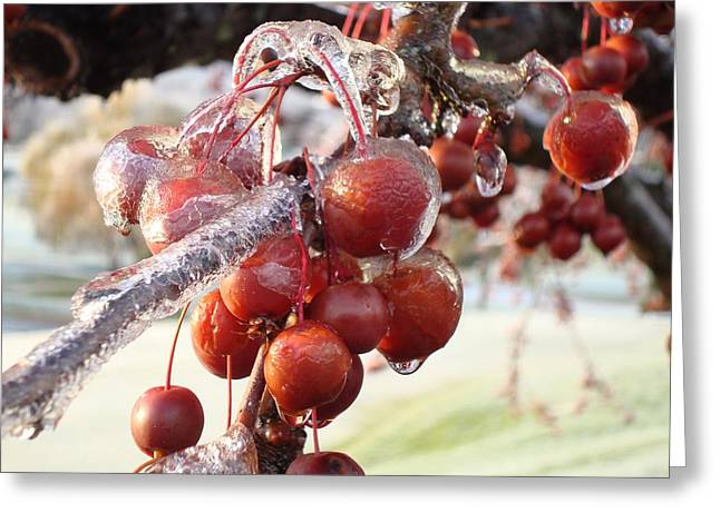 Crabapple Cards Greeting Cards - Ice on the Crab Apples Greeting Card by B Rossitto