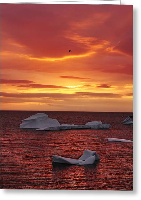 Iceberg Greeting Cards - Icebergs at Sunset Greeting Card by Christian Heeb