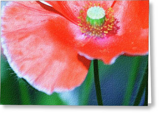 Flowers Stretched Prints Greeting Cards - Icelandic Poppy Greeting Card by Bonnie Bruno