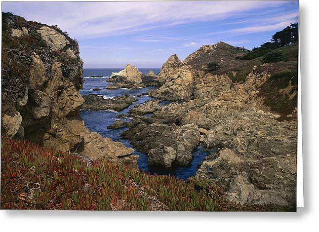 Big Sur California Greeting Cards - Iceplant Growing On Cliffs At Rocky Greeting Card by Tim Fitzharris