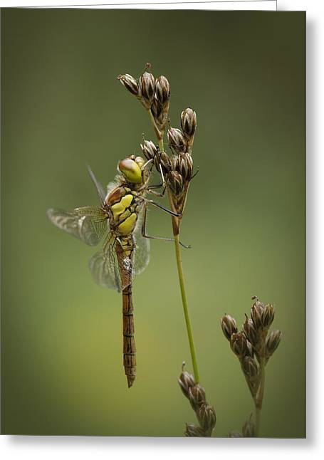 Evolved Greeting Cards - Icon of Summer Greeting Card by Andy Astbury