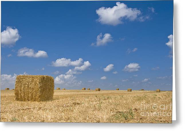 Bale Greeting Cards - Idyllic Hay Field Greeting Card by Noam Armonn
