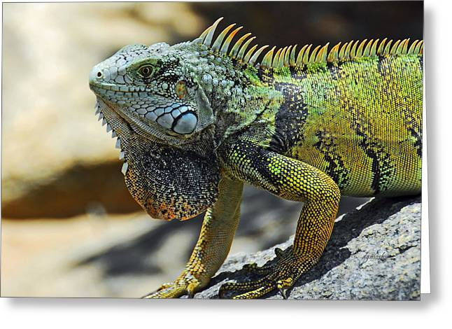 Birght Greeting Cards - Iguana smile 6504 Greeting Card by David Mosby