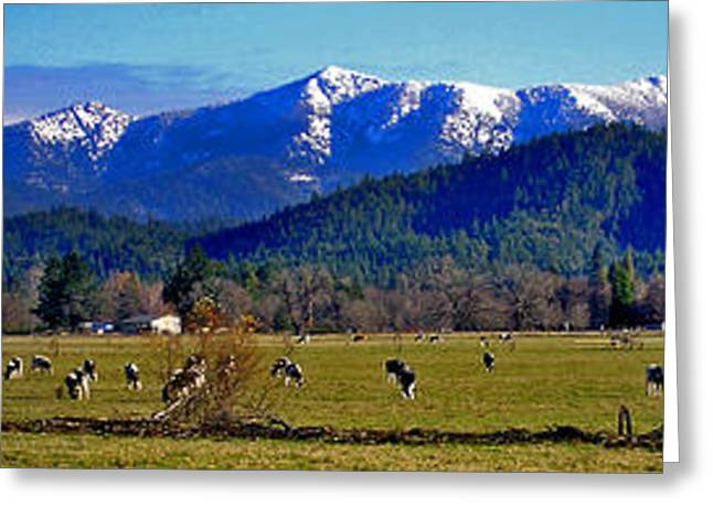 Best Sellers -  - Grazing Snow Greeting Cards - Illinois Valley cows  Greeting Card by David A Brown