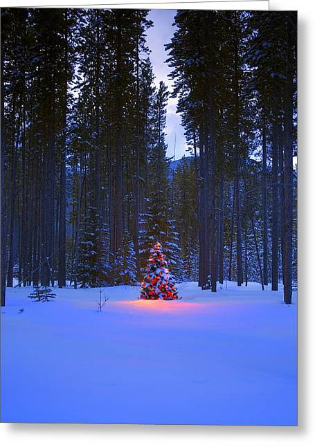 Christmas Tree In Nature Greeting Cards - Illuminated Christmas Tree In The Woods Greeting Card by Carson Ganci