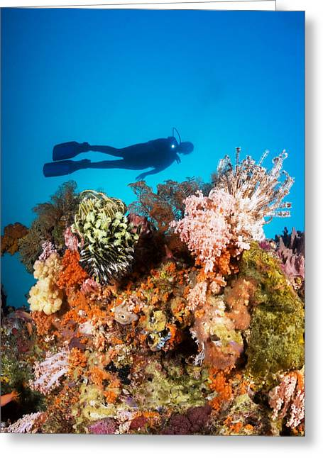 Snorkeling Photos Greeting Cards - Illuminated colorful reef and diver Greeting Card by Dave Fleetham - Printscapes