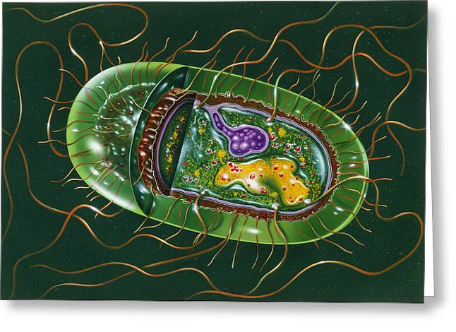 Microbes Greeting Cards - Illustration Of Structure Of Salmonella B Greeting Card by John Bavosi