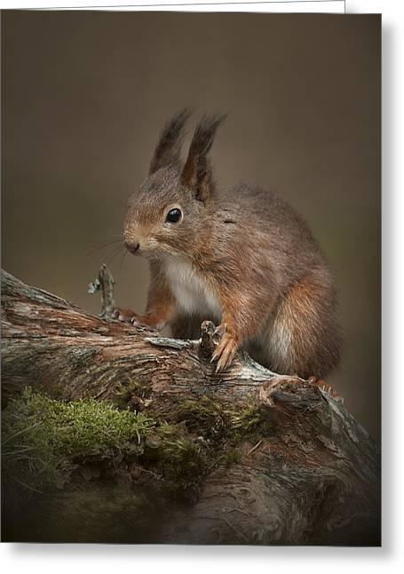 Merseyside Greeting Cards - Im cute.....so Feed Me Greeting Card by Andy Astbury