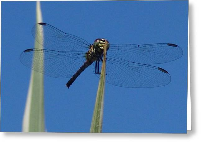 Macro Dragonfly Picture Greeting Cards - Im Hungry Greeting Card by Florene Welebny