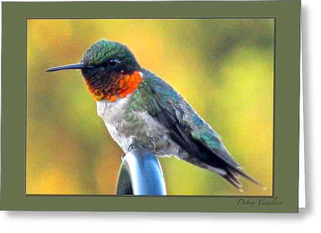 Ruby Throated Hummingbird Wall Art Greeting Cards - Im The King Greeting Card by Debra     Vatalaro