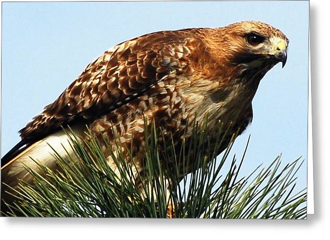 North Fork Digital Greeting Cards - Im Watching You Greeting Card by Don Mann