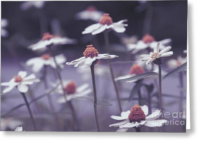 Daisy Greeting Cards - Imagine f02b Greeting Card by Variance Collections