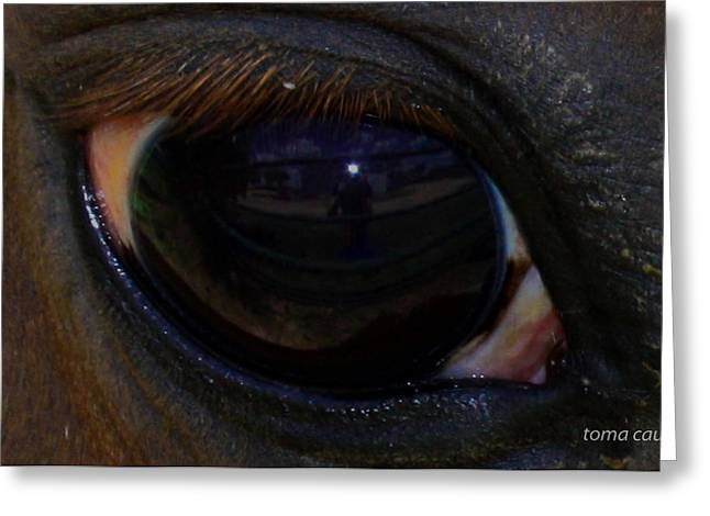 Self-portrait Greeting Cards - Immies Eye Greeting Card by Toma Caul