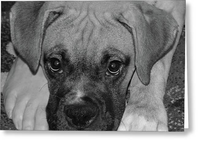 Impawsible Greeting Card by DigiArt Diaries by Vicky B Fuller