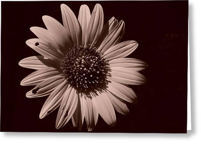 Lynnette Johns Greeting Cards - Imperfection Greeting Card by Lynnette Johns