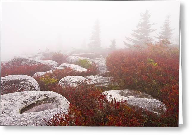 Sod Greeting Cards - In a Fog - Dolly Sods West Virginia Greeting Card by Bill Swindaman