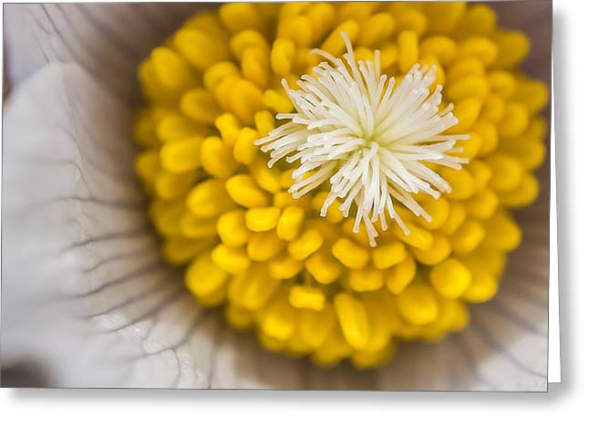 In Close Greeting Card by Mike Hendren