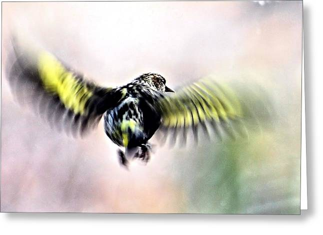 North Fork Digital Greeting Cards - In Flight Abstract Greeting Card by Don Mann