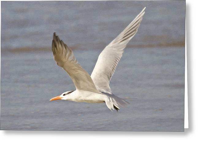 Tern Digital Art Greeting Cards - In Flight Greeting Card by Barbara Eads