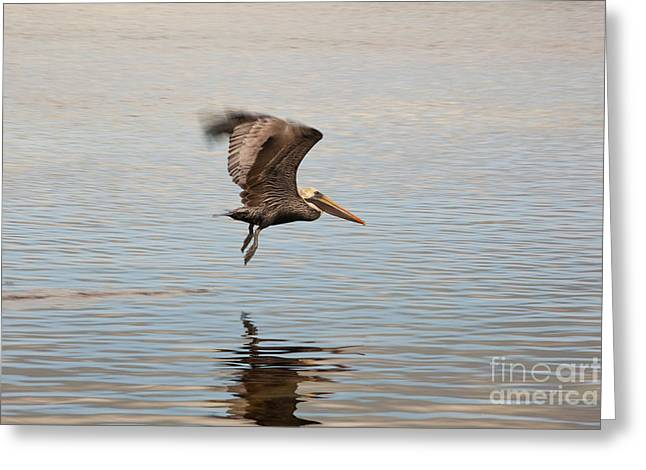 Bird Photography Greeting Cards - In Flight Greeting Card by Keith Kapple