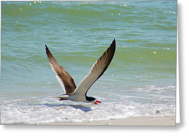 Seabirds Greeting Cards - In Flight Greeting Card by Monica Lewis