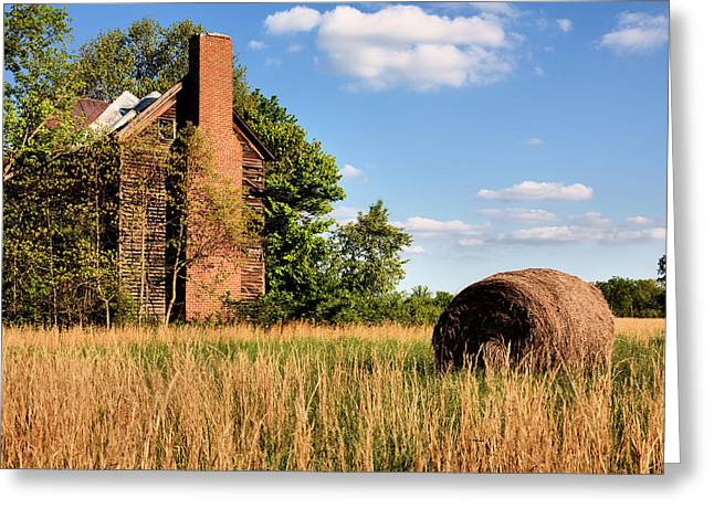 Fauquier County Virginia Greeting Cards - In Her Hay Day Greeting Card by JC Findley
