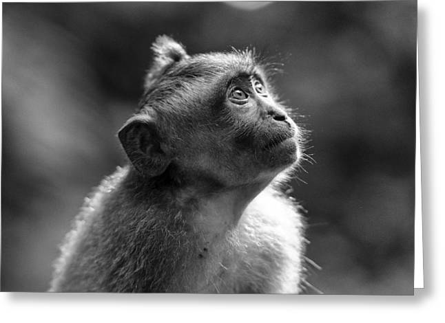 Primates Greeting Cards - In My Eyes Greeting Card by Leah Kennedy
