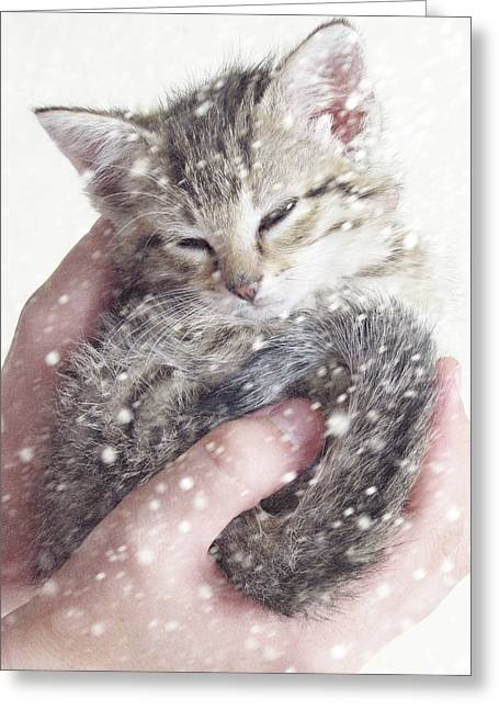 Kitten Prints Greeting Cards - In Safe Hands II Greeting Card by Amy Tyler