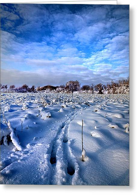 Geographic Greeting Cards - In Search Of Greeting Card by Phil Koch