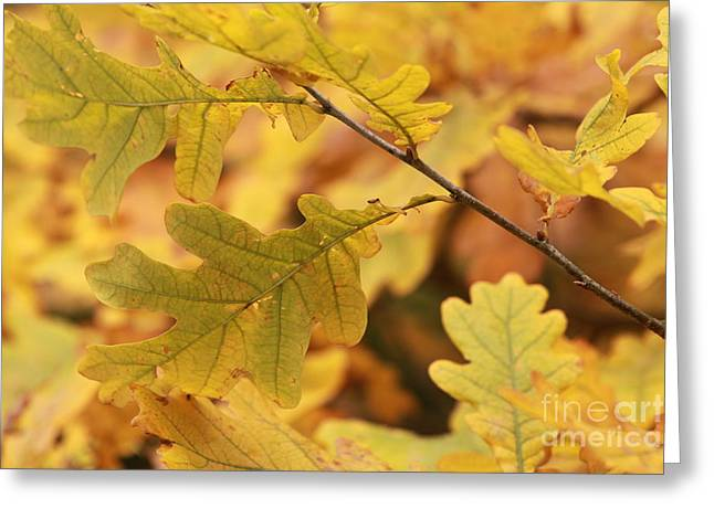 Yellow Leaves Pyrography Greeting Cards - In The Autumn Yellow Leaves Greeting Card by Tanya Polevaya