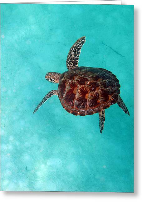 Green Sea Turtle Greeting Cards - In the Big Blue Greeting Card by JP Lawrence
