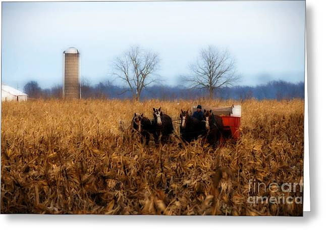 Corn Picker Greeting Cards - In the Corn 1 Greeting Card by David Arment