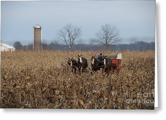 Corn Picker Greeting Cards - In the Corn 2 Greeting Card by David Arment