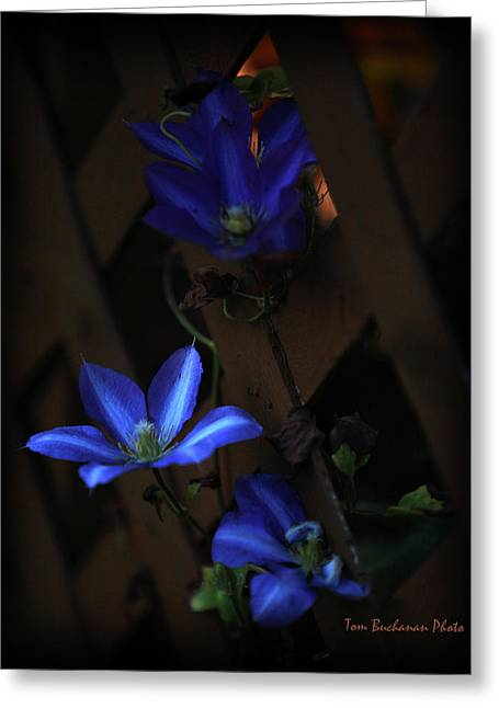 Trellis Greeting Cards - In the Evening Greeting Card by Tom Buchanan
