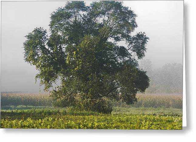 Corn Pyrography Greeting Cards - In the Fog Greeting Card by Shirley Tinkham
