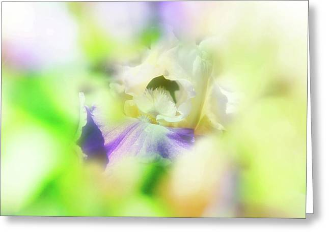 Floral Digital Art Greeting Cards - In the garden Greeting Card by Toni Hopper