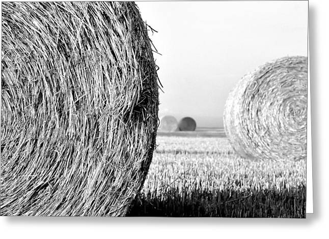 In the Hay -black and white Greeting Card by Dana Walton