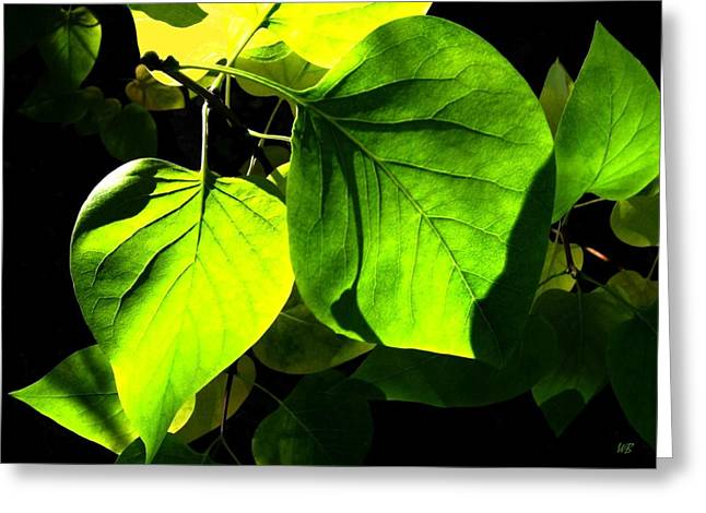 Limelight Photographs Greeting Cards - In The Limelight Greeting Card by Will Borden
