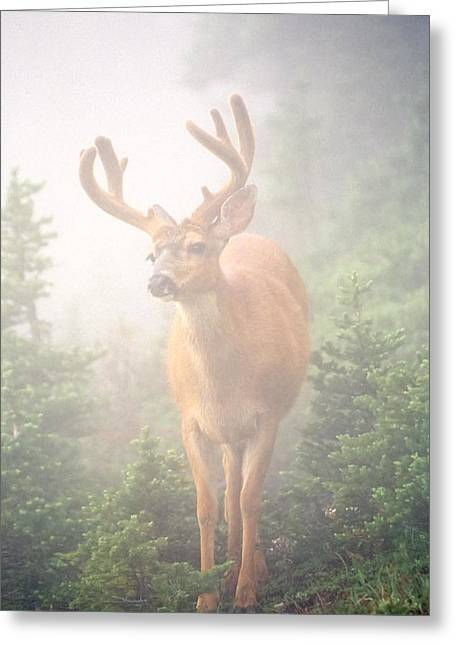 Cory Greeting Cards - In the Mist Greeting Card by Tom and Pat Cory