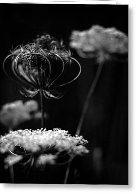Queen Annes Lace Greeting Cards - In the Sanctuary of the Queen Greeting Card by Rebecca Sherman