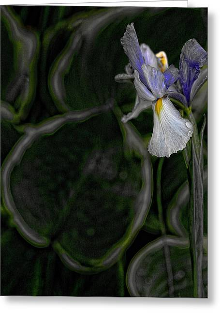 Wet Petals Greeting Cards - In the Silence Greeting Card by Bonnie Bruno