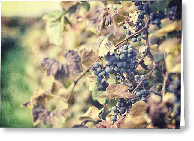 Grapevines Greeting Cards - In the Vineyard Greeting Card by Lisa Russo