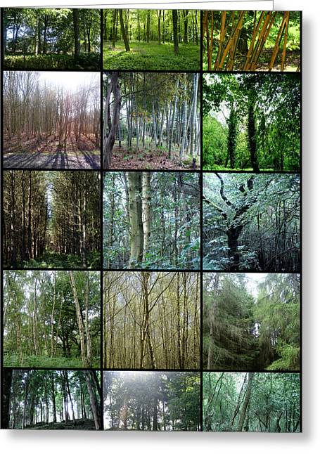 Roberto Alamino Greeting Cards - In the Woods Greeting Card by Roberto Alamino