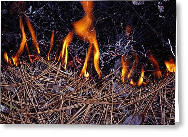 Pine Needles Greeting Cards - In This Close-up, The Flames Greeting Card by James P. Blair