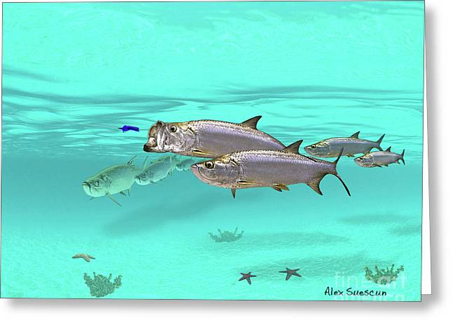 Tarpon Drawings Greeting Cards - Incoming Greeting Card by Alex Suescun