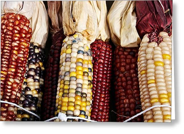 Indian Corn Greeting Card by Jarrod Erbe